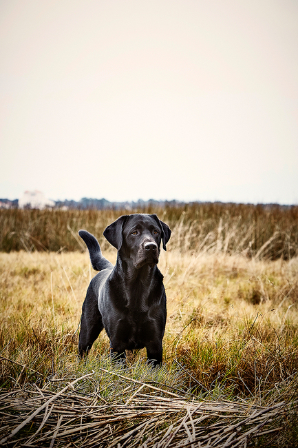 Hunting Dog: Dutch Island, GA