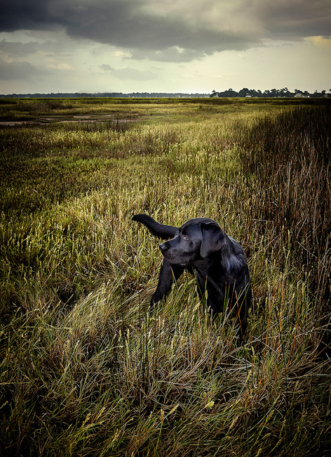 On the Marsh - Savannah