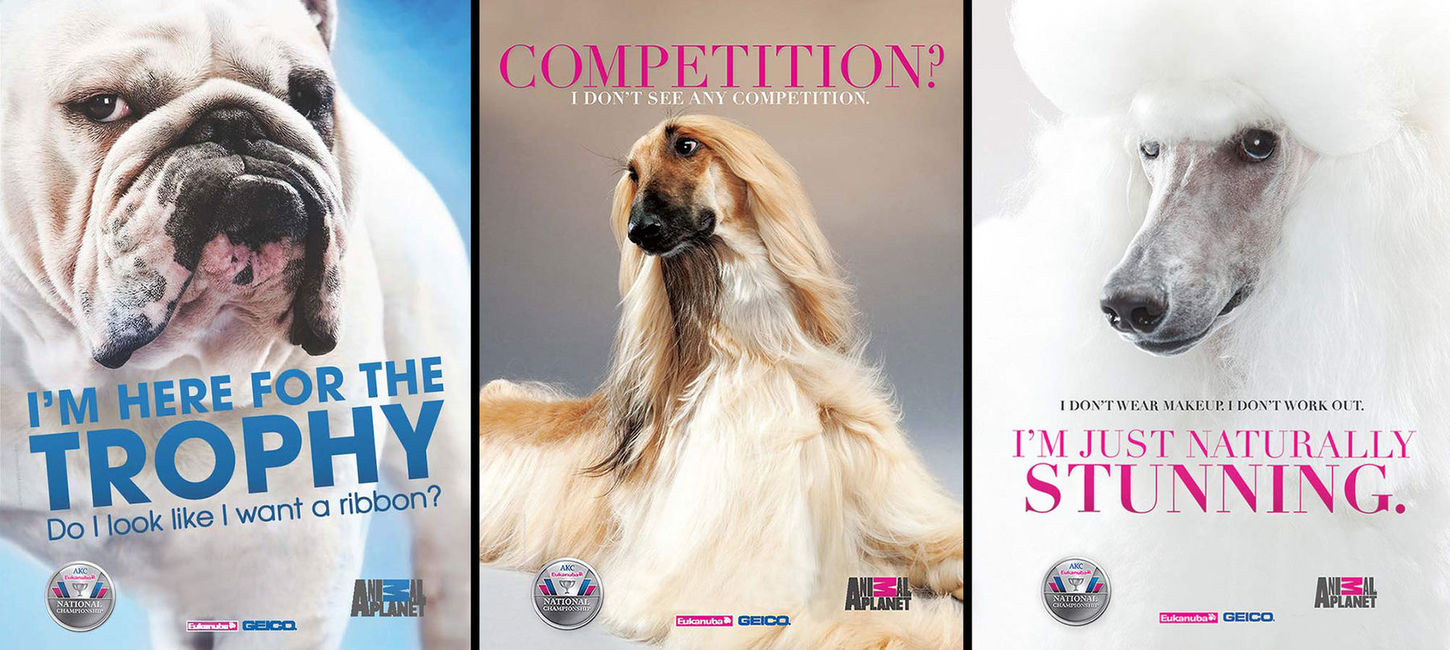 Animal Planet:  AKC Advertising Campaign